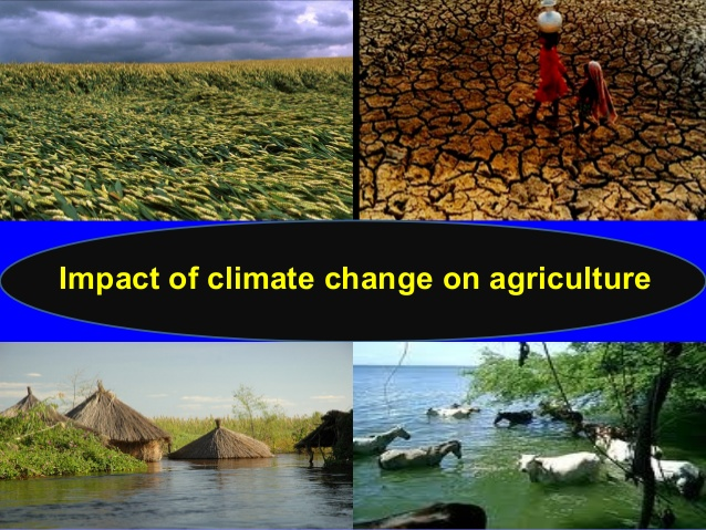 Climate Change And Its Impact On Indian Agriculture